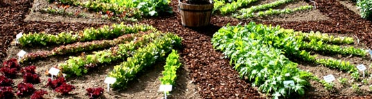 Fresh Vegetables, Herbs, & Seeds from Your Garden