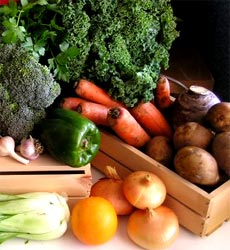 Vegetables, Herbs, & Seeds from DT Brown Save Money